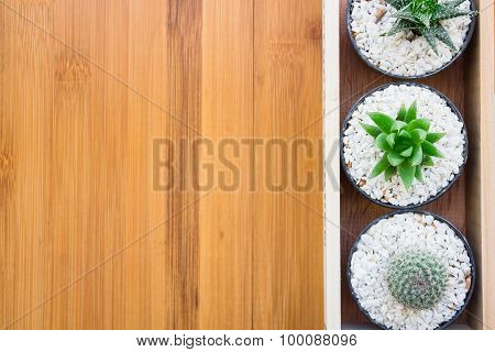 Still Life Natural Three Cactus Plants on Vintage Wood Background Texture