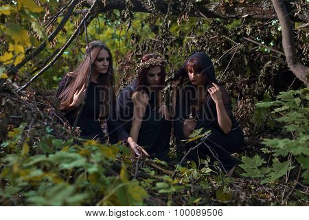 Witches In Dark Forest