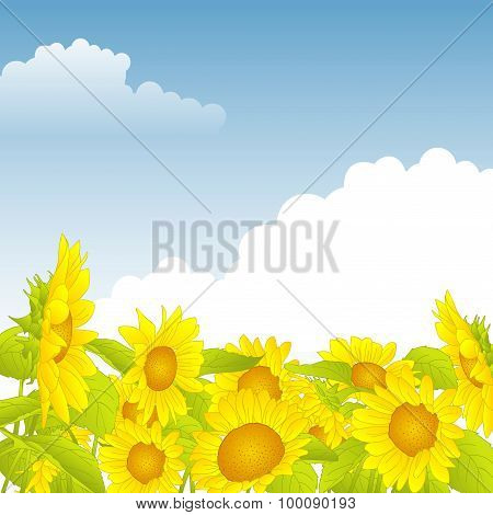 Field Of Yellow Sunflowers Under A Blue Sky