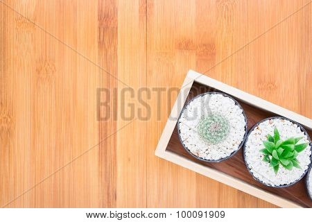 Still Life Natural Two Cactus Plants on Vintage Wood Background Texture