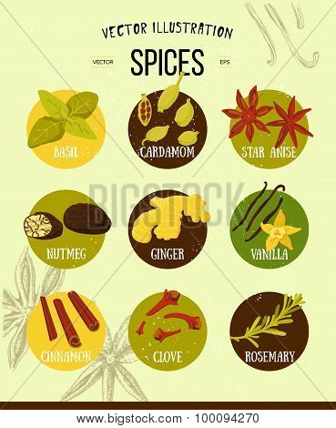 Colorful set of spices in flat style. Vector set of kitchen spices and herbs collection of stylized