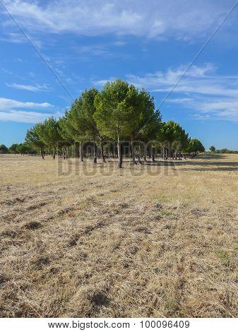 Pines Plantation