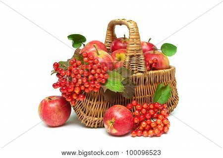 Apples And Viburnum Berries In A Basket On A White Background