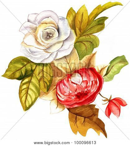A vintage-styled watercolour drawing of a red and white roses on white background