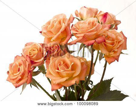 Tender tea roses on white background