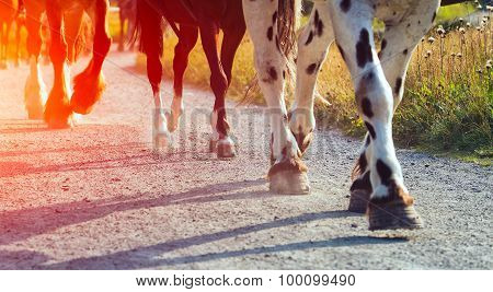 Legged Horses In A Row