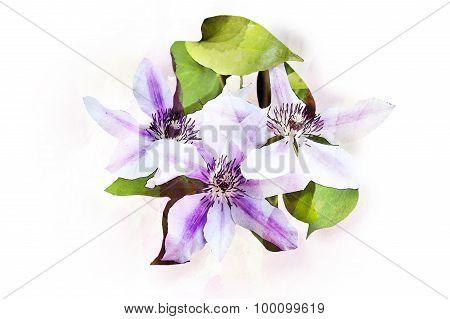 Watercolor Clematis Flowers
