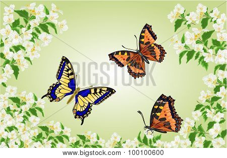 Butterflies Swallowtail And Vanessa In Jasmine Trees Vector