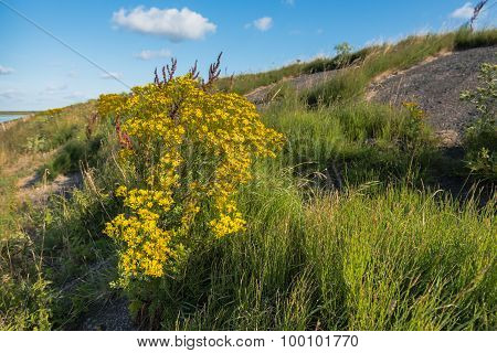 Flowering Wild Plants In The Summer Season