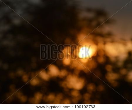 blurring of sunset behind the tree