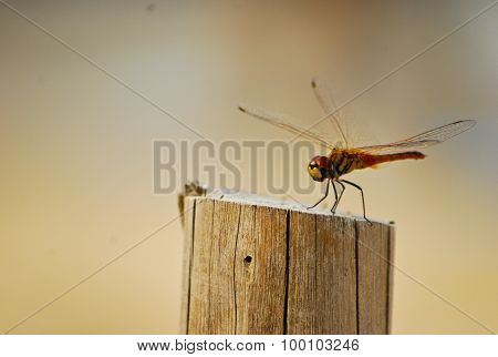 Dragonfly Is Hold Stand On Stump Base