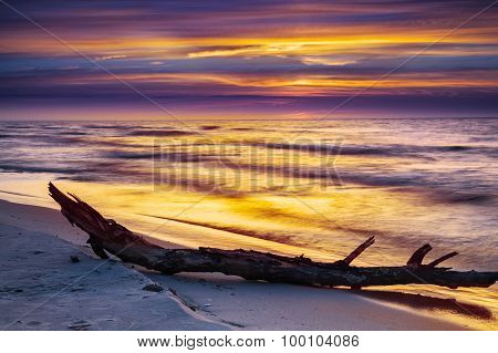 Dry Tree On The Beach At Sunset Over Sea