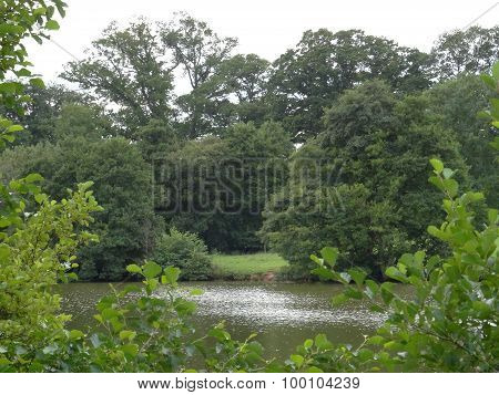 Lakeside Forest Landscape