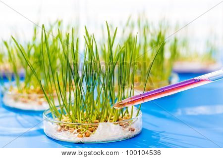 Genetically modified plants in a scientific laboratory