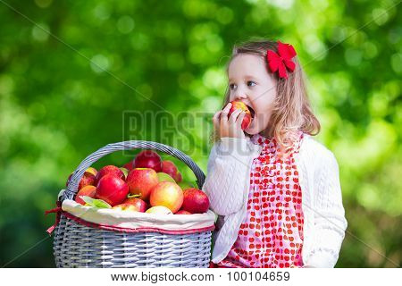 Little Girl Picking Apples In Fruit Orchard
