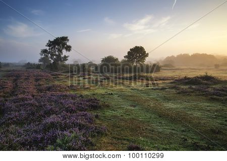 Stunning Dawn Sunrise Landscape In Misty New Forest Countryside