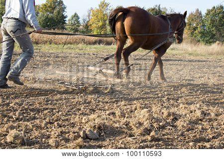 Horse Harrow