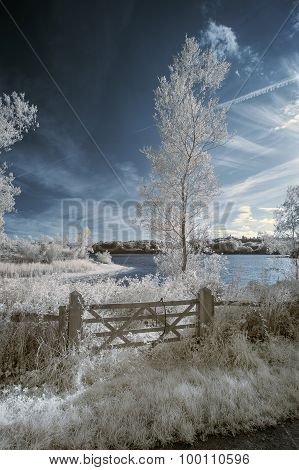 Landscape  In Infrared Of Lake In English Countryside In Summer With Surreal Colors