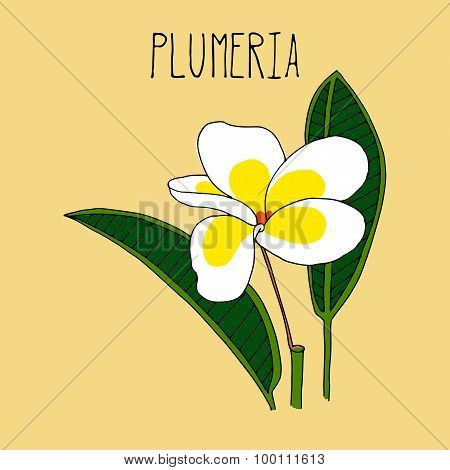 Hand drawing illustration of plumeria.