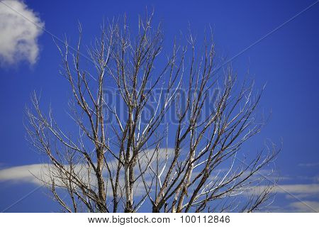 Tree on a blue sky