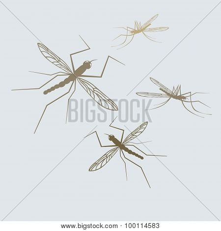 Silhouettes of vector mosquito