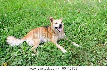 Little Dog On The Grass
