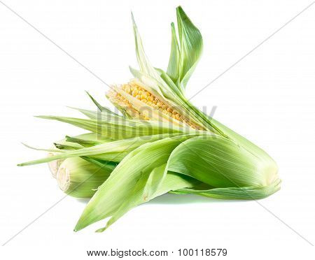 Fresh Ripe Sweetcorn isolated on white background