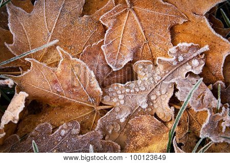 Leaves on the ground covered with ice