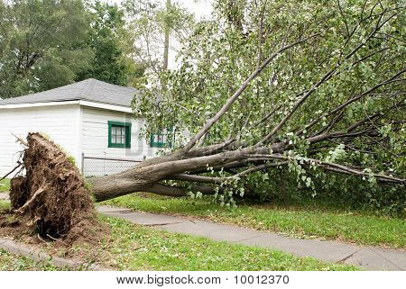 Wind Storm Damage