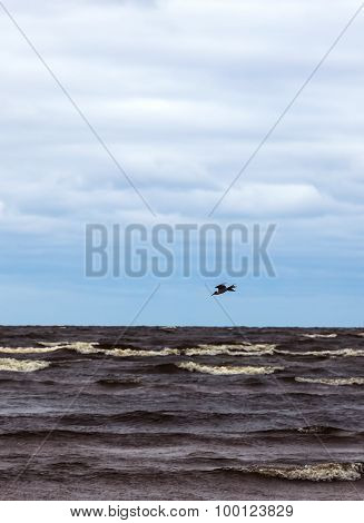 Landscape - Seagull Flying Over The Lake
