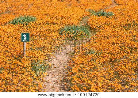 Trail Between A Carpet Of Flowers At Skilpad
