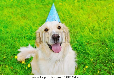 Happy Golden Retriever Dog In Birthday Paper Cap On The Grass Summer