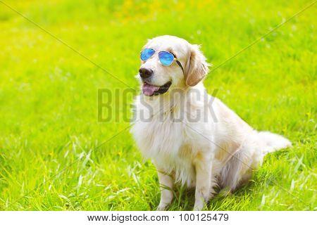 Portrait Of Golden Retriever Dog In Sunglasses Sitting On The Grass Summer