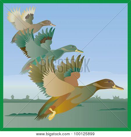 Three Flying Ducks