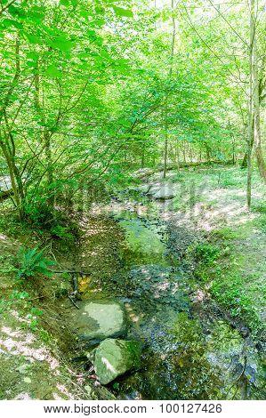 Stream Through A Lush Green Forest