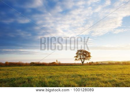 lonely tree at sunrise