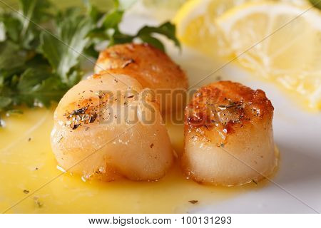 Grilled Scallops With Sauce On A Plate Macro. Horizontal