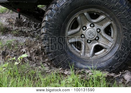 Wheel In Marsh