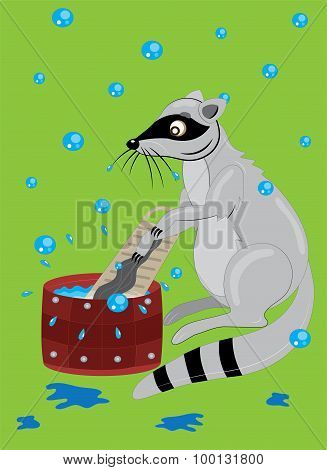 The raccoon washes clothes.
