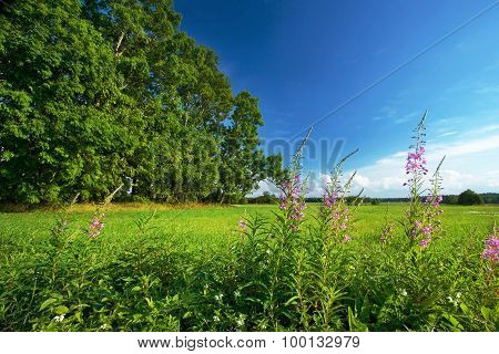 field with trees and flowers