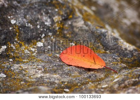 fallen leaf on the stone