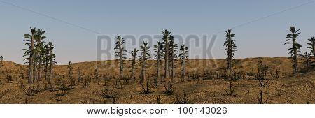 tempskya grove panorama