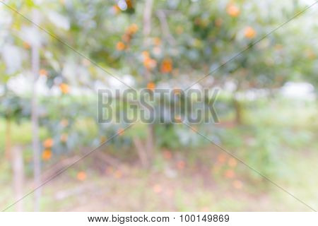 Blurred Persimmon Tree With Bokeh Background.