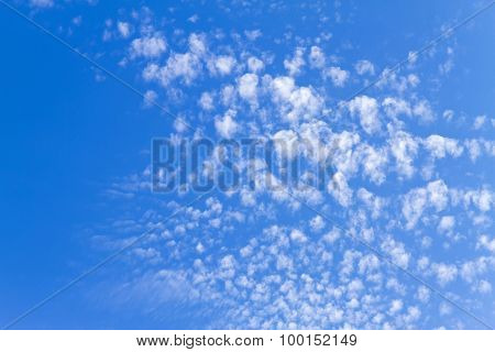 Small White Cloud Spread