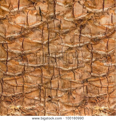 The texture of the bark of palm trees