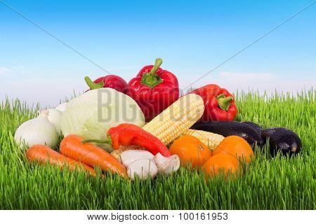 Fresh Vegetables On The Green Grass Against Sky