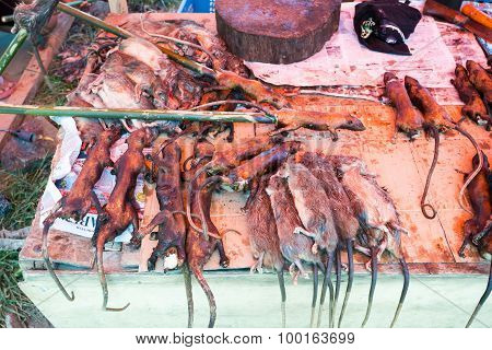 Tradition Speciality, Roasted Jungle Rat