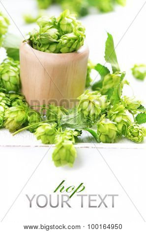 Green hop in wooden bowl over white background. Fresh whole hops close up isolated on white table. Ingredients for beer. Brewery concept. Alternative medicine. Space for your text. Vertical image