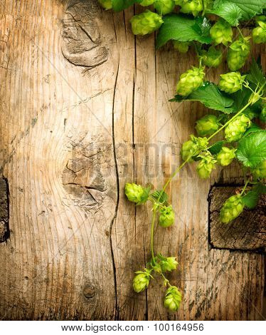 Hop over wooden cracked table background. Vintage toned. Beer production ingredient. Brewery. Beautiful fresh-picked whole hops border design close-up. Brewing concept surface. Vertical image.