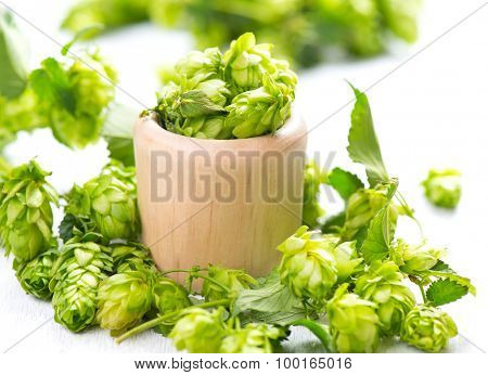 Hop in wooden bowl on white table. Green whole hops with leaves close up isolated over white background. Beer brewery concept. Alternative medicine